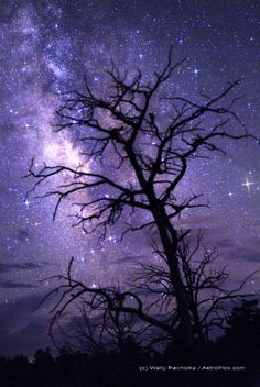 tree and Milky Way over Imperial Point