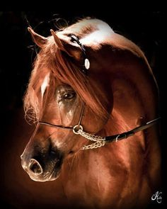 Arabian Beauty ~ This is a FAMOUS horse, but I cannot recall his name.
