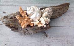 Driftwood Seashell Art/Beach House Decor ~by My Honeypickles
