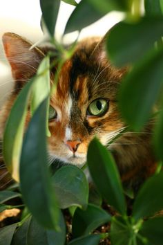 """""""Any cat who misses a mouse, pretends it was aiming for the dead leaf."""" - Charlotte Gray  ☺"""