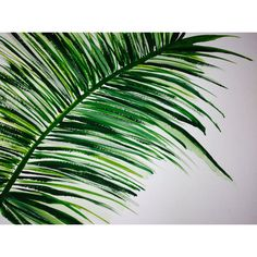 Abstract Palm Tree Leaf Painting 9x12 by Jennifer Flannigan