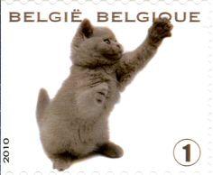 Belgique - 2010
