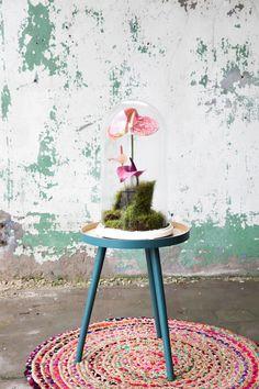 We verzamelden 5x DIY ideeën met planten en bloemen. Zo ben je lekker bezig én maak je iets moois voor in huis. Een win-win toch? Veel plezier!   diy ideeën knutselen - diy interieur planten - diy bloemen - diy bloemenkrans - diy bloemen decoratie - knutselen zomervakantie - knutselen vakantie - anthurium kokedama - anthurium op water - Boomhutje KIT - anthurium in een terrarium Living Room Kitchen, Kitchen Interior, Interior Inspiration, Interior Decorating, Flowers, Table, Plants, Home Decor, Gardens