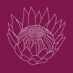 Protea Tattoo Concept by Michelle Lauren van den Berg, via Behance Protea Art, Protea Flower, Lino Art, Botanical Line Drawing, Flower Sketches, Silk Painting, Pictures To Paint, Painting Inspiration, Flower Art