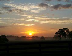 My Florida Sunshine