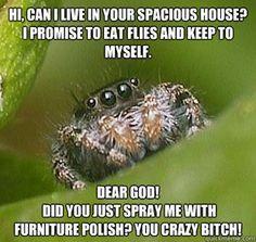 The Misunderstood House Spider Meme Haha Funny, Lol, Funny Stuff, Funny Things, Funny Shit, Random Stuff, Random Things, Nice Things, Freaky Things