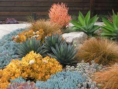 Seaside Colorful Succulent Garden - contemporary - Before Photos - San Diego - debora carl landscape design