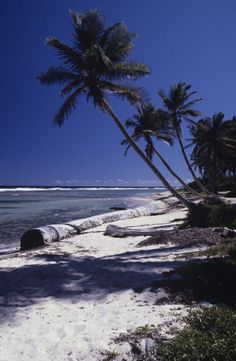 """Caribbean Paradise """"I am the master of my fate: the captain of my soul."""" William Ernest Henley"""