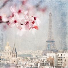 Paris Photograph - Paris Spring Blue -  Eiffel Tower with Plum Blossoms, Urban Home Decor, Wall Art
