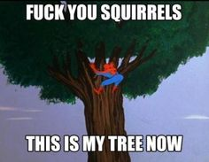 Give the squirrels their tree back!