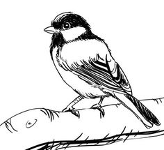 Bird On A Branch Drawing How to draw a bird step 5 Ink Drawings, Realistic Drawings, Easy Drawings, Animal Drawings, Drawing Sketches, Sketching, Bird Line Drawing, Branch Drawing, Drawing Birds