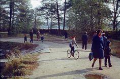 Фотография - Парк ТСХА осенью - Фотографии старой Москвы Country Roads, Photography, Fotografie, Photograph, Fotografia
