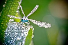 macro-dew-covered-insect-photos-3