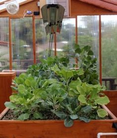 Portable Farms LTD targets eco-cities and eco suburbs to grow their own food with Portable Farms.