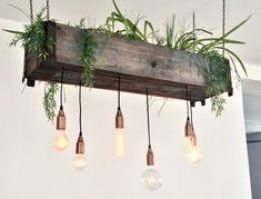 Pendant copper chains lamp hanging plant up cycled DIY cafe green interior decor wood green branding Photo Stine Nordskov Hansen Fantastic vegan cafe in Copenhagen &Osla. Diy Interior, Interior Decorating, Diy Decorating, Interior Plants, Interior Design, Diy Hanging, Hanging Plants, Plants Indoor, Wall Hanging Lights