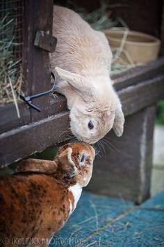 """Good mornin' honey bunny."" <3"