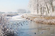 Winter bij Westmaas