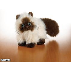 Himalayan! I'm also gonna get this one with leftover Christmas money. I'll name it Grumpy Cat. :)