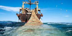 Après de longues négociations, l'UE interdit enfin le chalutage en eaux profondes