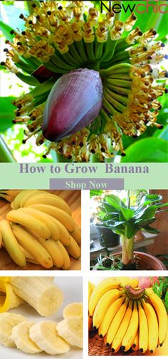 Don't want to buy my book. OK, so grow bananas instead.