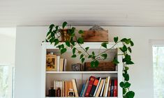 plants and books Farmhouse, Books, Plants, Libros, Rural House, Book, Plant, Book Illustrations, Cottage