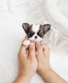 It's so small and cute. I wish I was that person.