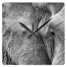 Shop The eye of an elephant square wall clock created by Schnappschuss. African Safari, Don't Forget, Wildlife, Elephant, Clock, Adventure, Animals, Watch, Animales