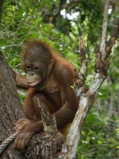 Rasa Ria Resort - Borneo