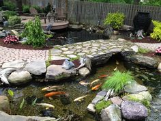 to a Crystal Clear Pond, Trouble Free Pond Maintanance Beautiful Ecosystem Pond. Learn the Secret to Achieving a Crystal Clear, Trouble-Free Pond. Learn the Secret to Achieving a Crystal Clear, Trouble-Free Pond. Backyard Water Feature, Ponds Backyard, Pond Landscaping, Landscaping With Rocks, Tropical Landscaping, Pond Bridge, Goldfish Pond, Pond Fountains, Pond Waterfall
