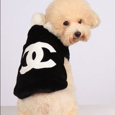 Adorable Little Puppy with a Channel Outfit.