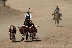 Andalusian Bulls #Cadiz