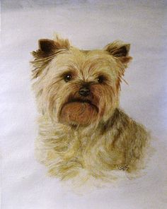 Watercolor portrait of Yorkshire Terrier, Nelson. Watercolor Portraits, Yorkshire Terrier, Pencil Drawings, Painting & Drawing, Teddy Bear, Paintings, Dogs, Animals, Yorkshire Terriers