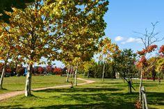 フォト - Google+ Sidewalk, Autumn, Amazing, Google, Fall, Walkways, Pavement, Curb Appeal