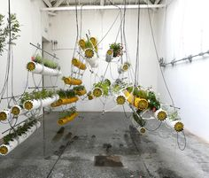 A Hydroponic Vision For The Future Of Architecture