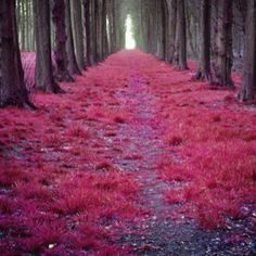 Enchanted forest #ridecolorfully