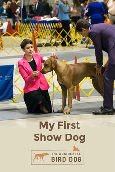 The story of my first show dog, Colombo the Rhodesian ridgeback, and the challenges I've gone through as an owner handler. Rhodesian Ridgeback, Dog Show, Challenges, Bird, Dogs, Birds, Pet Dogs, Doggies