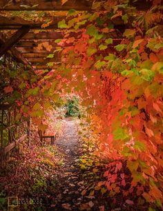 Neulich vor der #Uni  Der HerbstEs herbstelt in Saarbruecken! ... Neulich vor der Uni: Der HerbstEs herbstelt in Saarbruecken! Bei euch auch  Ich wuensche euch noch einen angenehmen #Dienstag #Abend. Bleibt sauber (y)  Ich wuerde #mich freuen wenn ihr das #Bild teilt!  #Saarbruecken / #Saarland | Neulich vor der Uni: Der HerbstEs herbstelt in Saarbruecken! ... http://saar.city/?p=31502