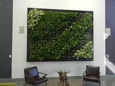 Living Green Wall by Ambius