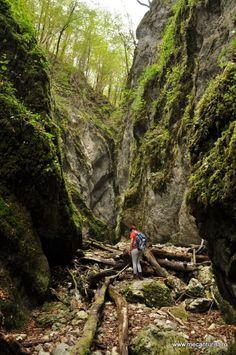 Valea Sighiștelului are o lungime de aproximativ 9 km și se găsește în partea de vest a Munților Bihor. Pe întreaga întindere a văii se pot întâlni numeroase formațiuni carstice, aceastea fiind motivul pentru care întreaga zonă a fost declarată rezervație naturală geologică. Rezervația naturală geologică din Valea Sighiștelului are în componență peste 150 de …