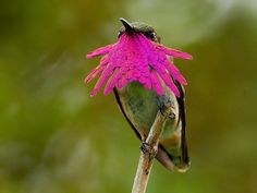 Hermoso colibri posando con increíbles colores