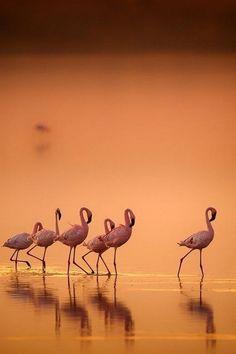 Resultado de imagem para flamingos in sunset
