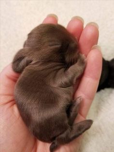 19 Super Tiny Bunnies That Will Melt The Frost Off Your Heart - Tiere - Animals Wild Baby Animals Super Cute, Cute Baby Bunnies, Cute Little Animals, Cute Funny Animals, Tiny Bunny, Tiny Baby Animals, Bunny Rabbit, Cutest Animals, So Cute Baby