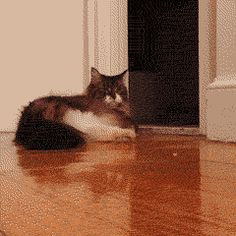 New GIF tagged dogs, cats, cat s via Giphy http://ift.tt/1ACGycK