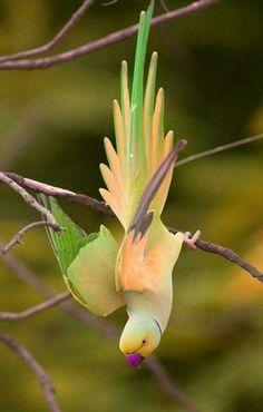 Bird - Rana Mir - Google+