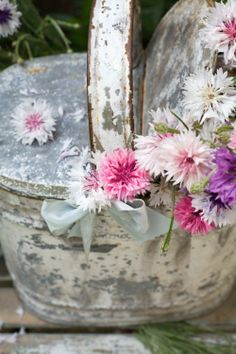 Bachelor buttons in a shabby pot - so pretty!