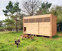 Architect builds tiny timber barn for adorable pygmy goats in Bavaria Goat Barn by Michael Kuhnlein – Inhabitat - Sustainable Design Innovation, Eco Architecture, Green Building