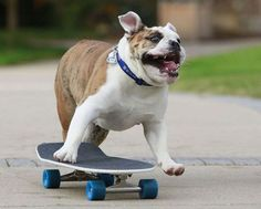 This WILL be my dog one day!
