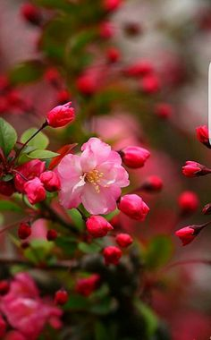 Ideas For Flowers Photography Beautiful Nature Flowers Nature, Spring Flowers, Apple Flowers, Nature Nature, Spring Blooms, Wild Nature, Amazing Flowers, Beautiful Flowers, Beautiful Images