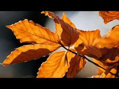 I miss you most of all my darling When autumn leaves start to fall Mahir Feride - YouTube