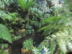 Small Pool in the Fern Room